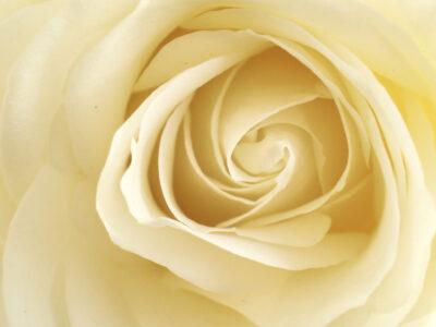 パーソナルカラーで考える 白は美人に見える色?